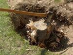 Digging-tree-stumps_zhqqk5_hiru6y.jpg