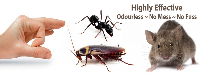 Pest Control Melbourne AU.jpg