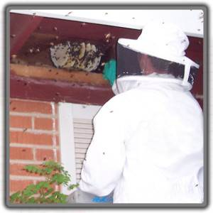 honeycomb-removal-in-tucson-300x300.jpg