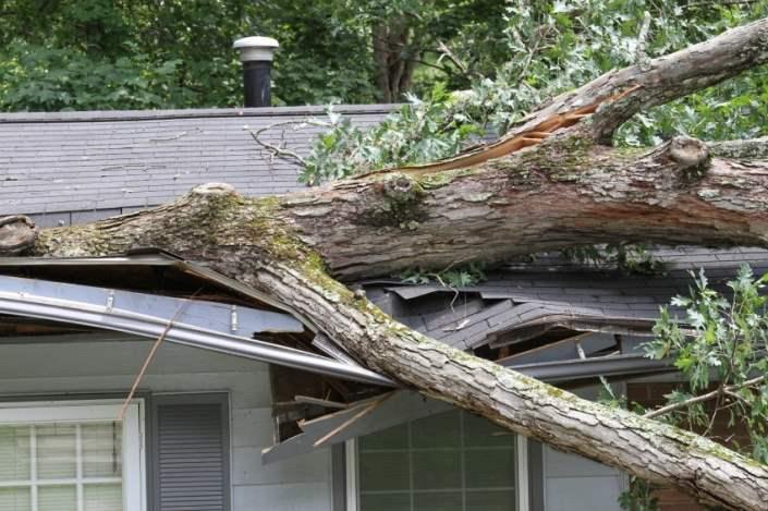 tree-and-wind-damage-repairs-toronto-705x469.jpg