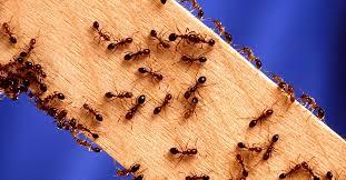 Marks Pest Control Canberra.jpg