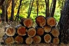 logs-3639211_640.jpg